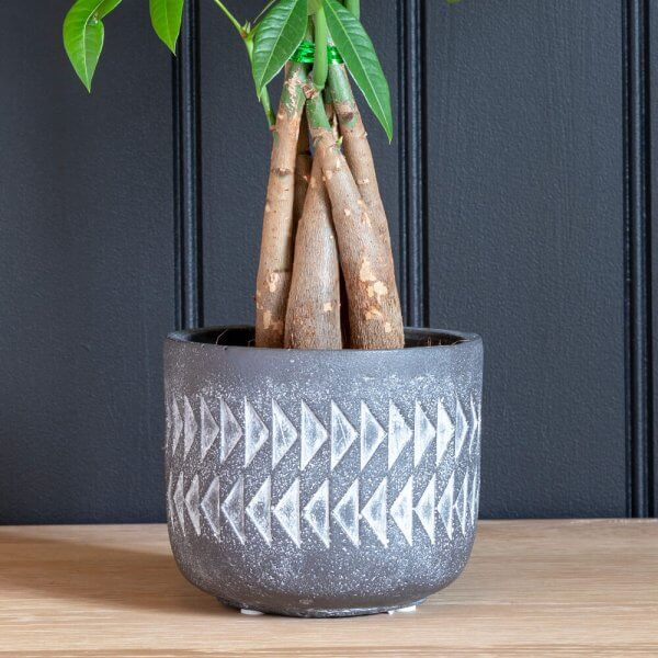 Aztec Large Indoor Ceramic Plant Pot Lifestyle 1